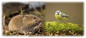 Highlights from the public consultation on the current bird and mammal guidance (EFSA 2009)