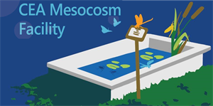 Why choose CEA for mesocosm studies?